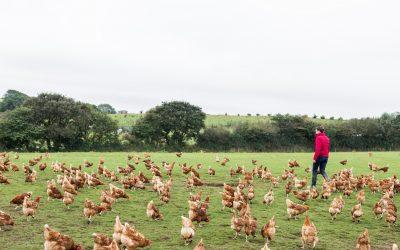 Safeguard British Food Standards